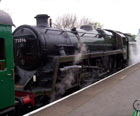 Water Cress line